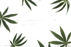 大麻六片叶子 库存照片
