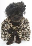 大头发和豹子印刷品外套 图库摄影