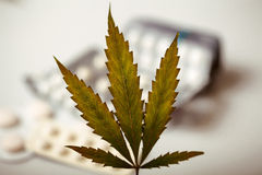 大麻叶子背景药片 免版税库存图片