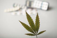 大麻叶子背景药片 库存图片