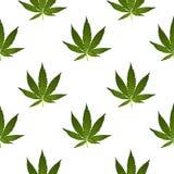 大麻大麻在葡萄酒线性样式-无缝的样式生叶 免版税库存图片
