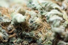 大麻宏指令 图库摄影