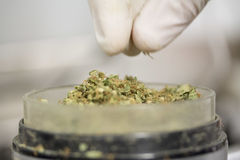 大麻宏指令 免版税库存照片