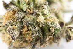 大麻宏指令86050891 库存图片