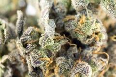 大麻宏指令86051084 库存图片