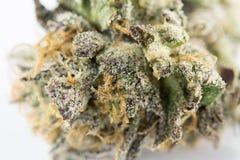 大麻宏指令86051293 库存照片