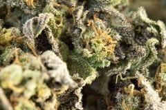 大麻宏指令86051526 免版税库存图片