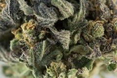 大麻宏指令86051906 免版税库存图片