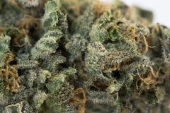 大麻宏指令86051998 免版税库存照片