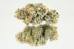 大麻宏指令86052044 库存图片