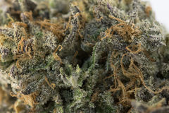 大麻宏指令86052160 库存照片