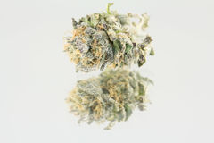 大麻宏指令 免版税库存图片