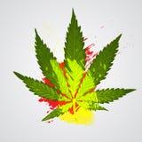 大麻或大麻 免版税图库摄影