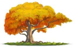 大结构树 免版税库存照片