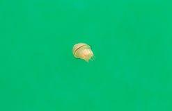 大水母游泳在港口 免版税库存照片