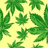 大麻生叶无缝的传染媒介样式 免版税库存照片