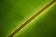 大绿色叶子,背景 库存照片