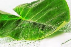 大绿色叶子 库存照片