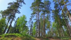 大绿色树,看法从下面 慢动作steadicam英尺长度 股票视频
