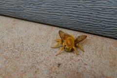 大黄色蜂 免版税库存照片