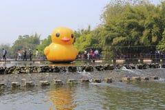 大黄色鸭子在litianyuan乡下游乐园 库存照片