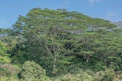 大绿色结构树 图库摄影
