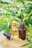大麻草本和叶子治疗的 图库摄影