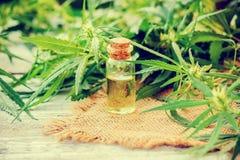 大麻草本和叶子治疗的 免版税图库摄影
