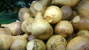 大头菜,瑞典白萝卜,芸苔napus rapifera, 库存图片
