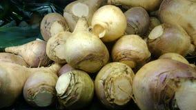大头菜,瑞典白萝卜,芸苔napus rapifera, 库存照片