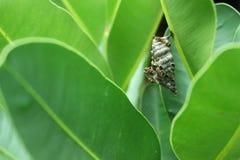 大黄蜂修造它的巢 免版税库存照片