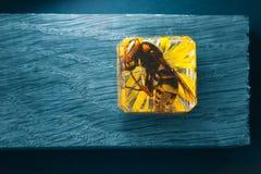 大黄蜂大黄蜂类crabro,金盏草 图库摄影