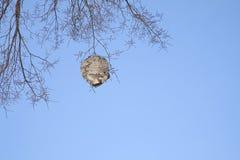 大黄蜂巢在晚秋天 免版税图库摄影