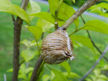 大黄蜂的巢 库存照片