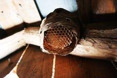 大黄蜂的巢 免版税库存照片