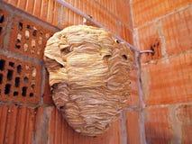 大黄蜂的巢 图库摄影