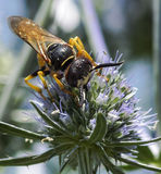大黄蜂的Colourfull图片 免版税库存图片