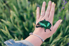 大蝴蝶在手边 库存图片