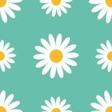 大戴西春黄菊 逗人喜爱的花植物收藏 春黄菊象生长概念 无缝的样式包装纸,纺织品t 免版税库存照片