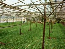 大叻,越南9月05日 库存图片