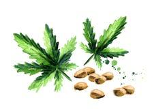 大麻 向量例证