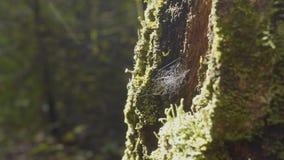 大spiderweb 蜘蛛网特写镜头 与分支的大蜘蛛网特写镜头在它,发光在阳光下 免版税图库摄影