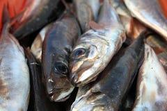 """天â€的抓住""""新鲜的被抓的鱼在葡萄牙 库存照片"""
