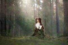 今天上午澳大利亚牧羊人在森林 免版税库存图片