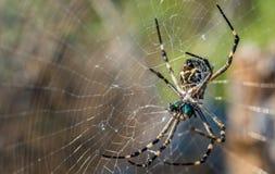 天体织布工蜘蛛和网 免版税库存照片