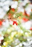 天使圣诞树装饰 免版税库存图片