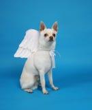 天使狗 库存图片