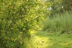 晴天在夏天森林里 免版税库存照片