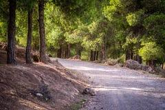 天在森林里,乌季达,摩洛哥 免版税库存图片