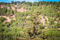 天在森林里 免版税图库摄影
